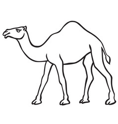 Camel contour icon vector