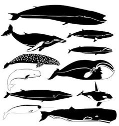 Contours of the whales vector image vector image