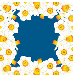 daffodill - narcissus border on indigo blue vector image