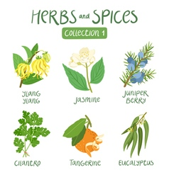 Herbs and spices collection 1 vector