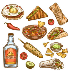 traditional mexican food mexican national burrito vector image