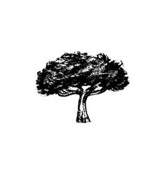 tree icon vintage vector image