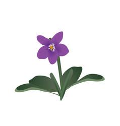 viola flower vector image