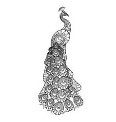 Hand drawn Peacock vector image