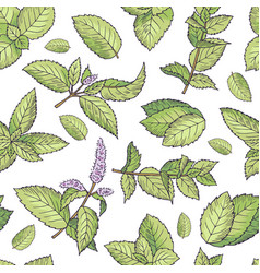 green leafs of fresh mint seamless pattern vector image vector image