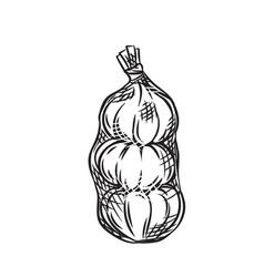 Garlic in mesh bag vector