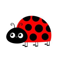Lady bug ladybird insect ladybug icon cute vector