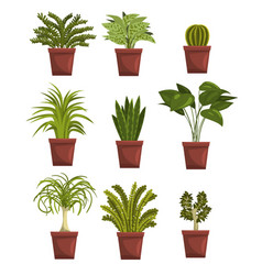 Set of pot green deciduous plants with leaves vector