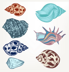 set retro seashells in vintage hand drawn style vector image