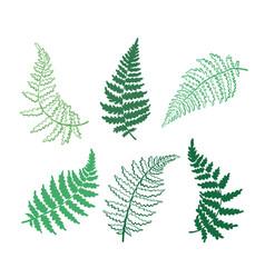 botanical of fern leaf vector image