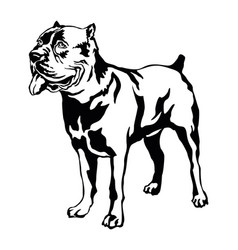Decorative standing portrait of dog cane corso vector