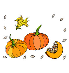 Orange pumpkin vegetable with flower and seeds vector