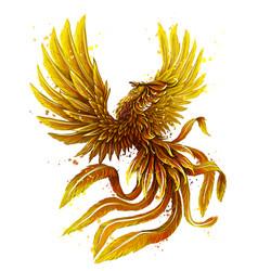 phoenix color graphic digital drawing vector image