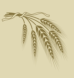 spikelets of wheat tied with a ribbon on a beige vector image