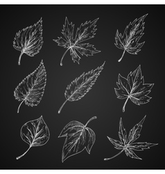 Leaves silhouettes chalk cketches set vector image