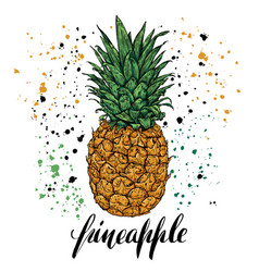 hand drawn with fresh pineapple vector image