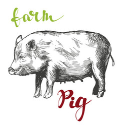 farm pig hand drawn realistic vector image