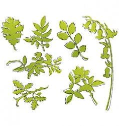 leaf sketches vector image