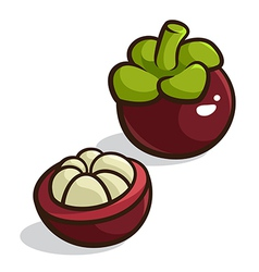 Purple Mangosteen vector image