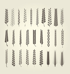 wheat and rye spikelet collection in different sty vector image