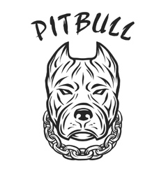 The head of a pit bull with a collar vector image