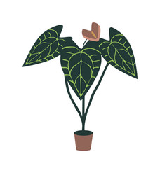 Anthurium hose plant vector