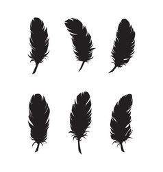 Feathers for design and decoration vector image