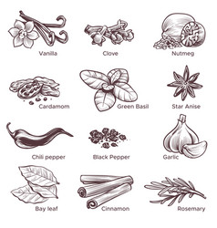 hand drawn spices sketch cooking ingredient vector image