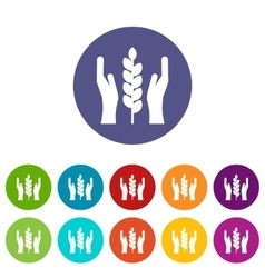 Hands and ear of wheat set icons vector