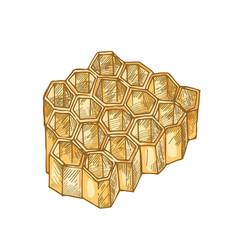 Honeycomb isolated on white background hexagonal vector