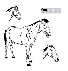 Line art of horse vector