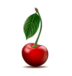 ripe red cherry isolated on white background vector image