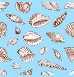 seamless pattern shells or mollusca different vector image