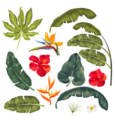 Set exotic tropical leaves isolated vector