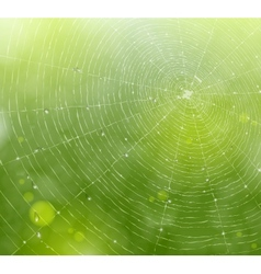 Web of natural background vector