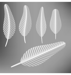 Set of Grey Feathers vector image