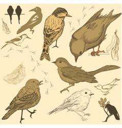 Set of handdrawn birds vector image vector image