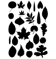Leaf silhouette collection vector image vector image
