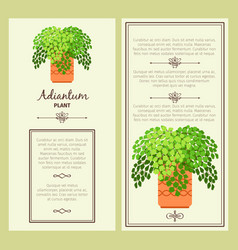 greeting card with adiantum plant vector image vector image