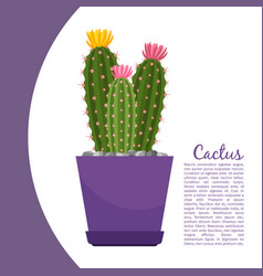 Cactus plant in pot banner vector