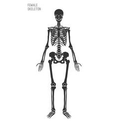 Female skeleton image vector