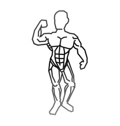 Human male muscles vector