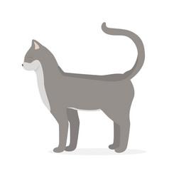 kitty cat vector image