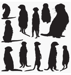 meerkat silhouettes vector image
