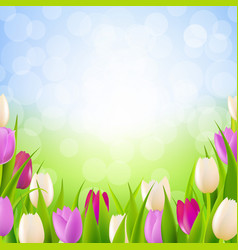 Nature card with tulips vector