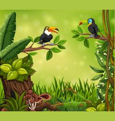 Toucan bird in jungle vector