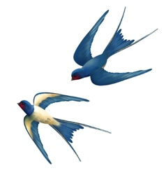 Flying Swallows vector