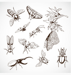 insect set hand drawn black vector image