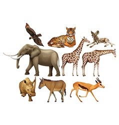 Various kind of wild animals vector image