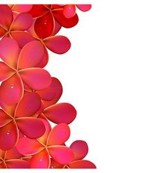 Pink Frangipani Frame vector image vector image